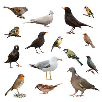 Fun facts about birds